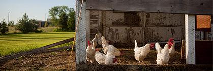 Mit unseren günstigen Gartenhäusern erhalten Sie den idealen Hühnerstall