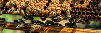 Holzgartenhaus und Blumenmeer: Das Bienenparadies im Garten