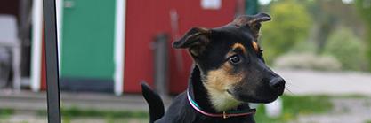 Das Freizeithaus als Vereinsheim: Perfekt für Mensch und Hund