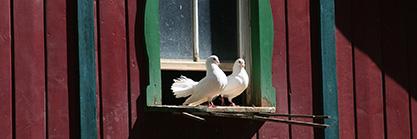 Gartenhaus als Taubenschlag aufbauen: So einfach geht's