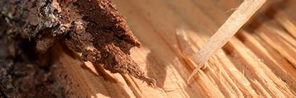 Das Holzgartenhaus vor Ungeziefer schützen