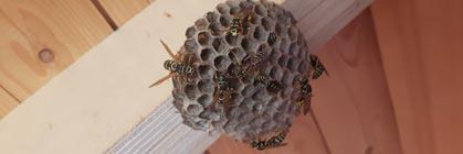 Halten Sie Ihr Holzgartenhaus frei von Wespen und Hornissen